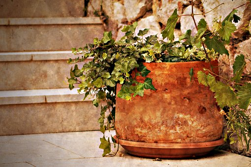 Take your potted plants with you