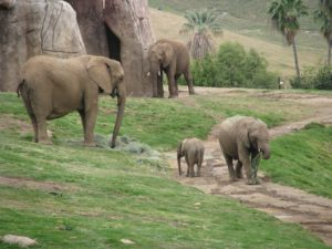San Diego zoo is one of the most famous ones in the world.
