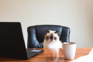 Fluffy cat sitting in an office chair with a laptop and a mug in front of it