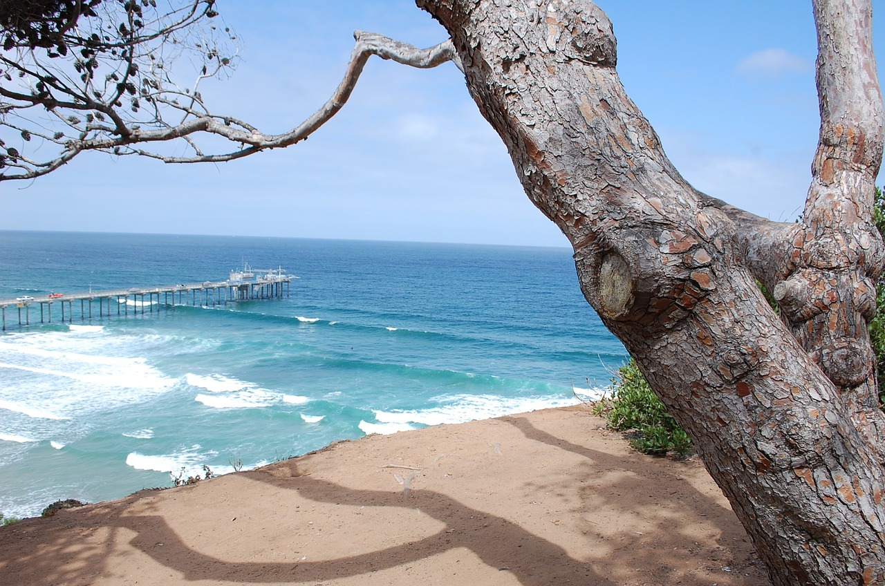 View on a tree and the beach in daytime, La Jolla San Diego