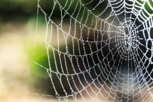 Spider web, representing fraudulent moving companies