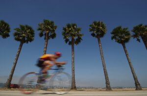 Cyclist, palm trees, and the sky.