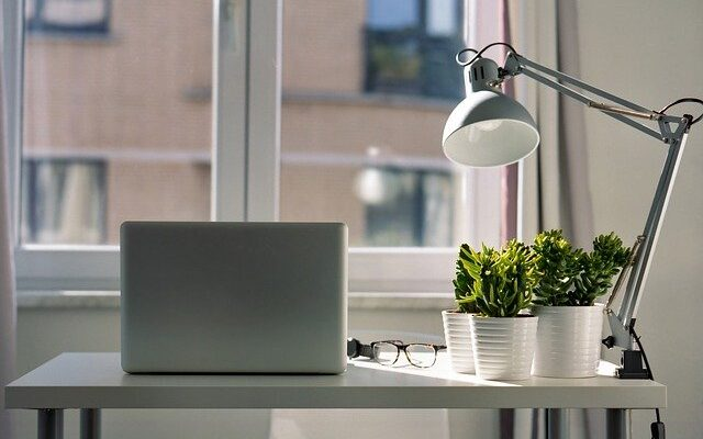 Ideal low-maintenance plants for your office space