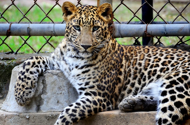Best areas to rent in San Diego is this area because of leopard in a zoo.