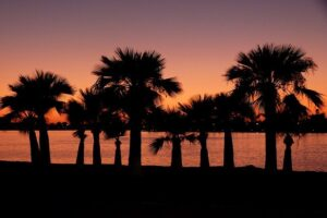 Palm Trees in the Sunset - Beautiful nature is one of the reasons why California is a great state for seniors.