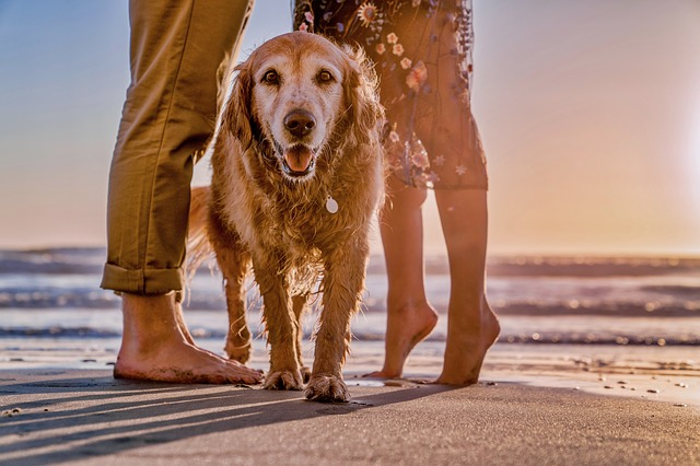 Wet dog with his owners on the beach.