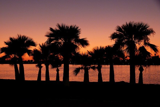 Palm trees in San Diego seen just before sunset are the best part of San Diego for expats