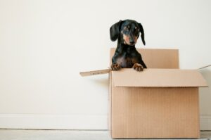 besides moving, movers can help you with pet relocation
