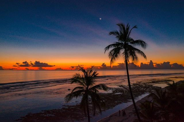 Palm trees near the ocean.
