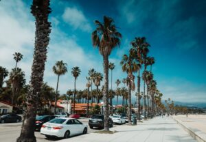 Palm trees on the street with parked cars